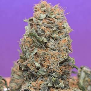 CBD Spliff Berry by Barney Green week 14.