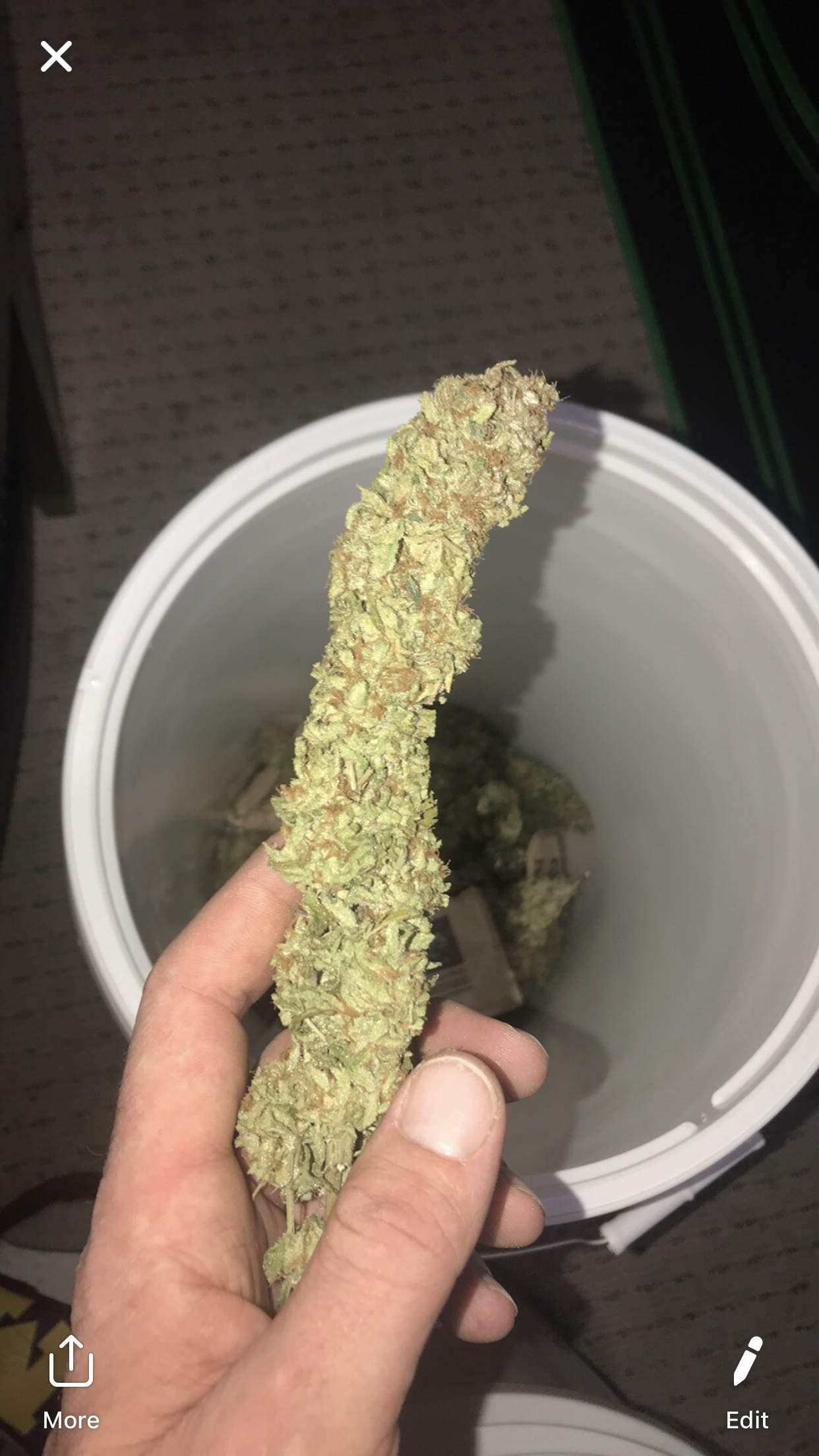Green Crack, Gorilla Glue #4 S1, Roadkilll skunk grow ...