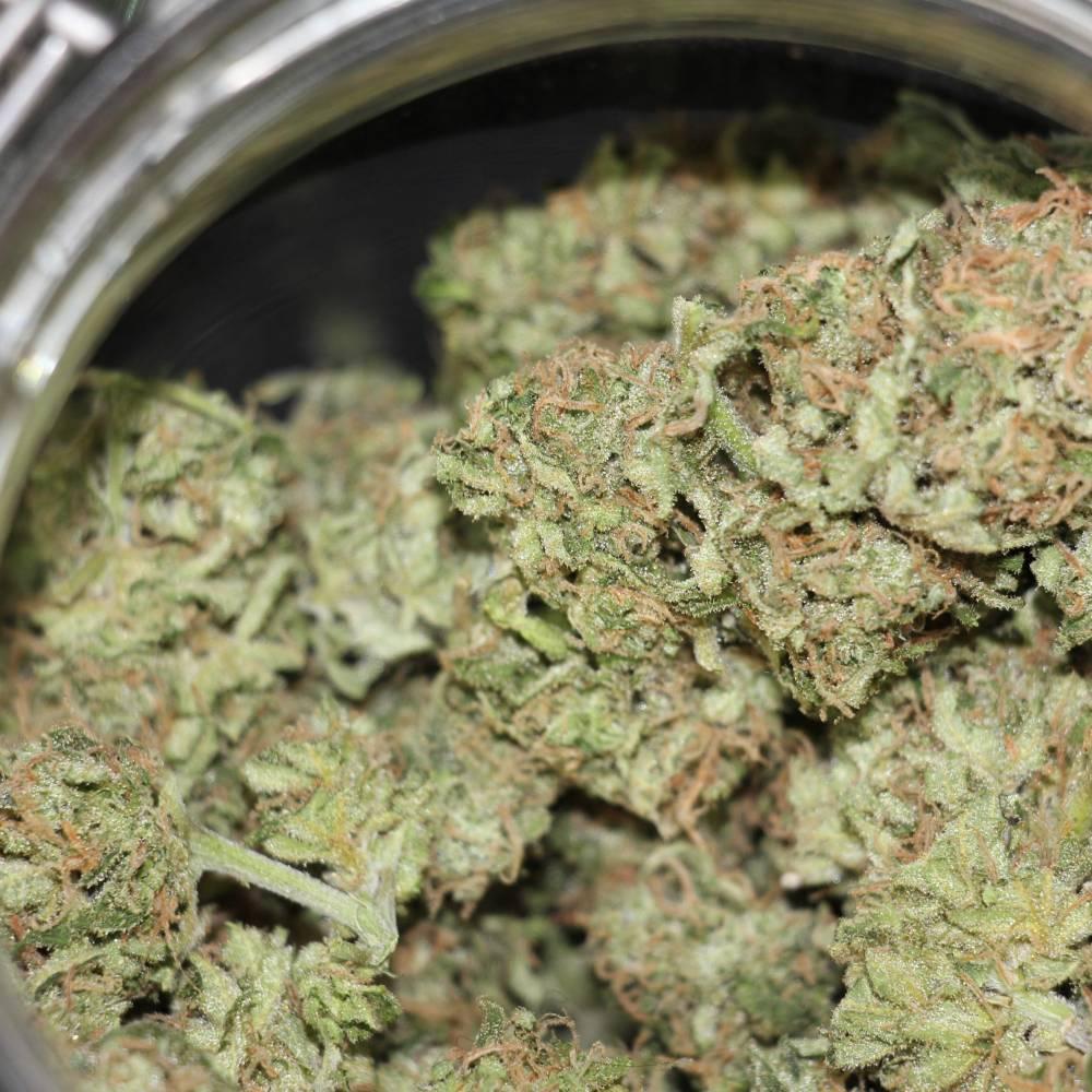 Сколько граммов с куста марихуаны выращивание конопли удобрение