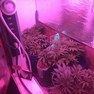 First Grow!