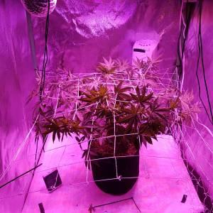 2nd Grow
